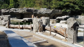 zoo_kunsfelsen_hellabrunn_wasserbecken